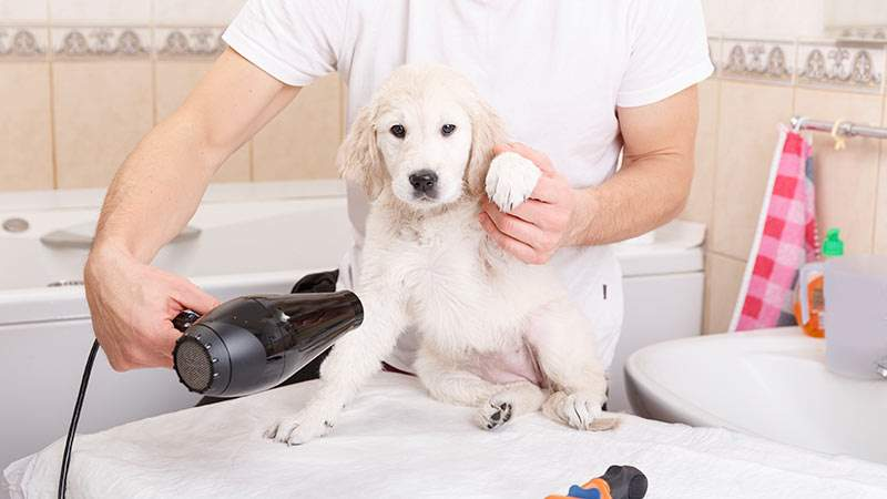 Top trends in multi family amenities the pet spa for A family pet salon